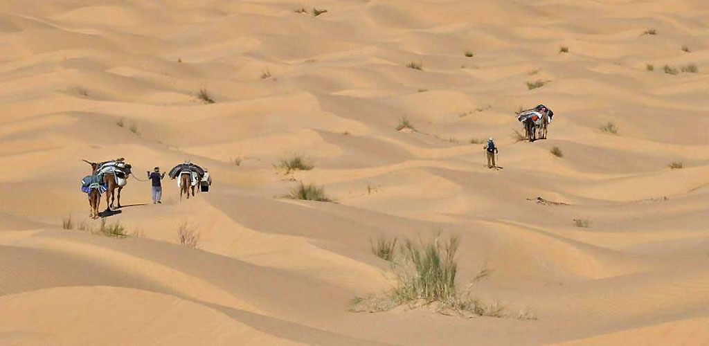 Trek dans le désert tunisien